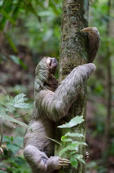 overcome sloth